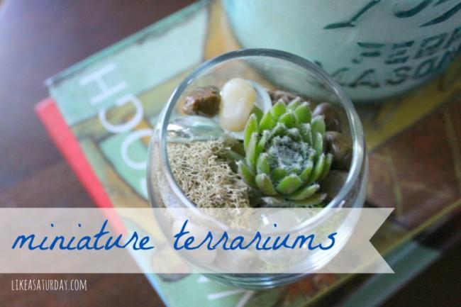 Miniature Terrariums