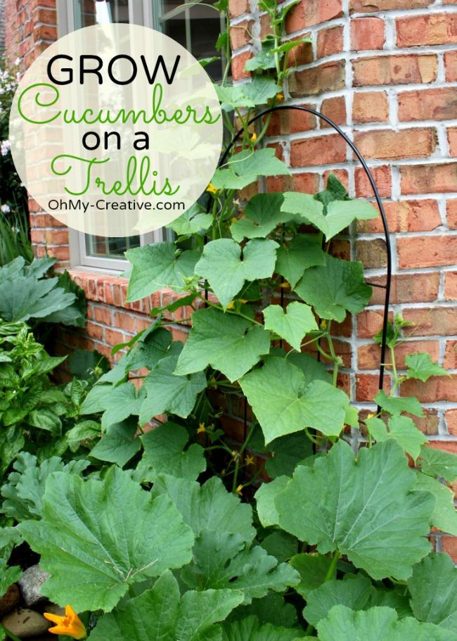 Small Space Gardening - Grow Cucumbers On A Trellis  - OhMy-Creative.com