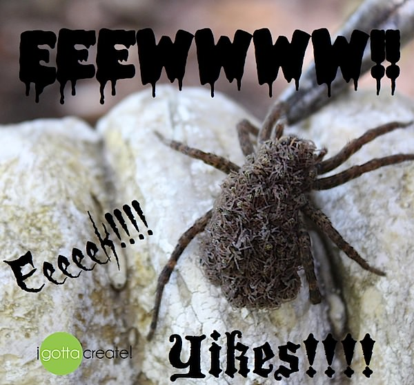 wolf spider eek at I Gotta Create