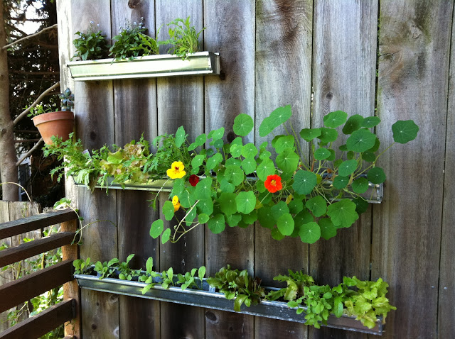 recycled painted gutters attached to wooden planks with plants and soil inside the gutters