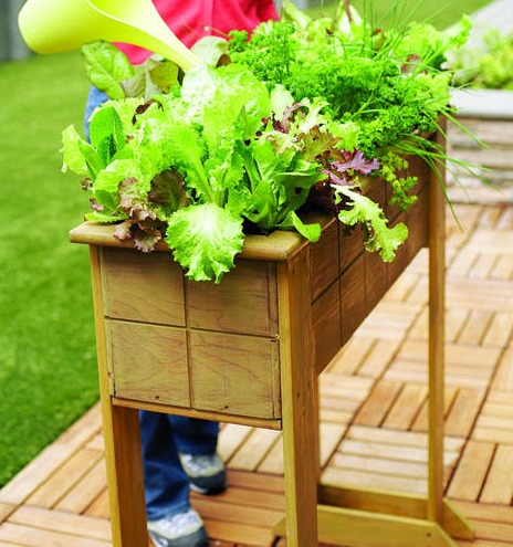 small table made into garden space for spices and herbs