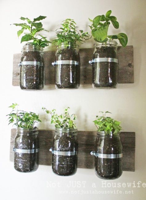 mason jars affixed to wooden boards with herbs planted inside the jars