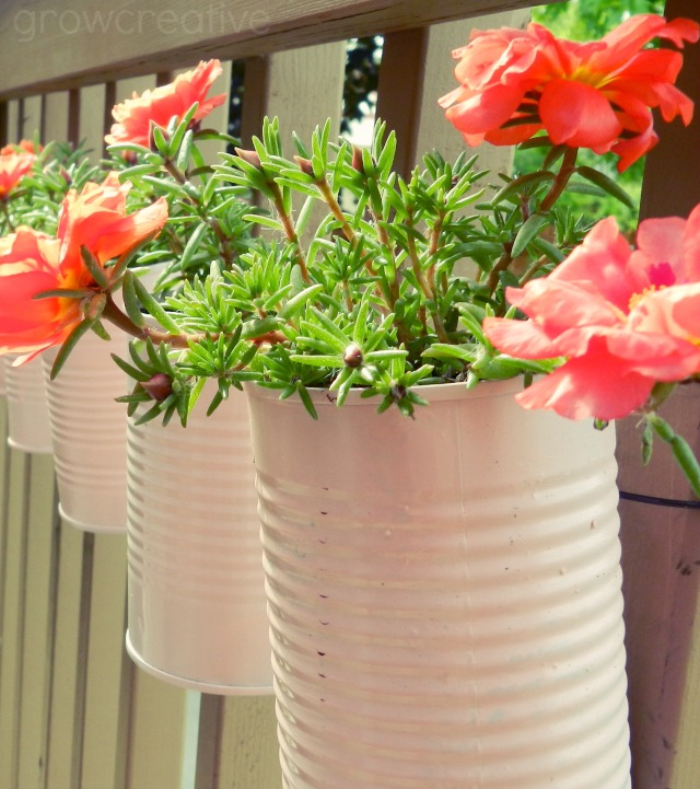 Vertical tin can planters