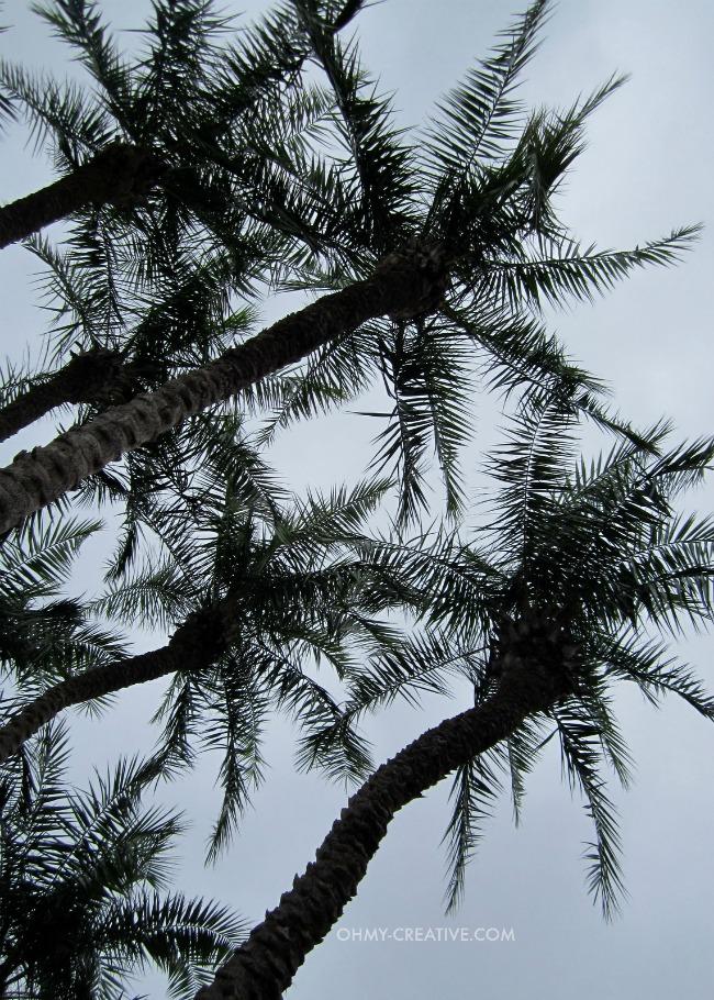 Palm Trees Epcot International Flower and Garden Festival   |  OHMY-CREATIVE.COM