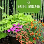 Best Backyard Ideas For Landscaping